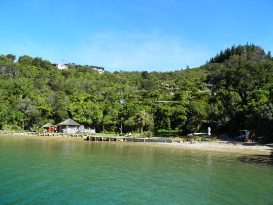 Punga Cove nestled among the trees