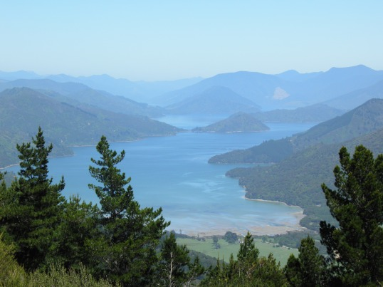 Kenepuru Sound from Eatwells Lookout