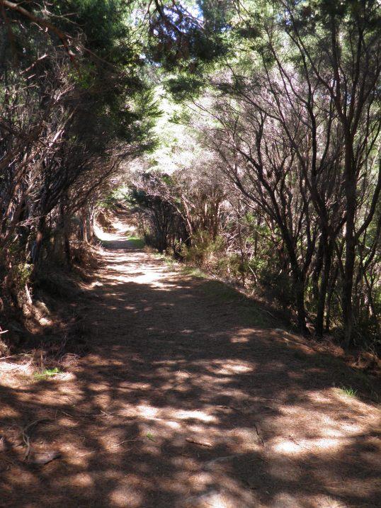 Woodland tunnel