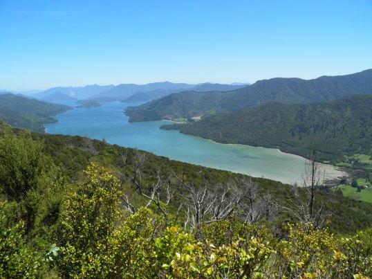 Head of Kenepuru Sound